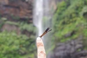 ピナイサーラの滝とトンボ